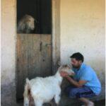 Nikos mit seiner Ziege auf Korfu