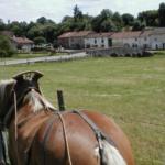 PferdewagenUrlaub in den Vogesen
