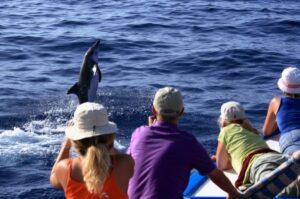 Kanaren-Familienurlaub: Wale und Delfine beobachten