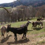 Wo leben Esel in ihrem natürlichen Lebensraum?