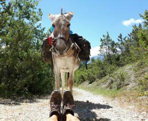 Kurze Pause für Mensch und Esel beim Eseltrekking