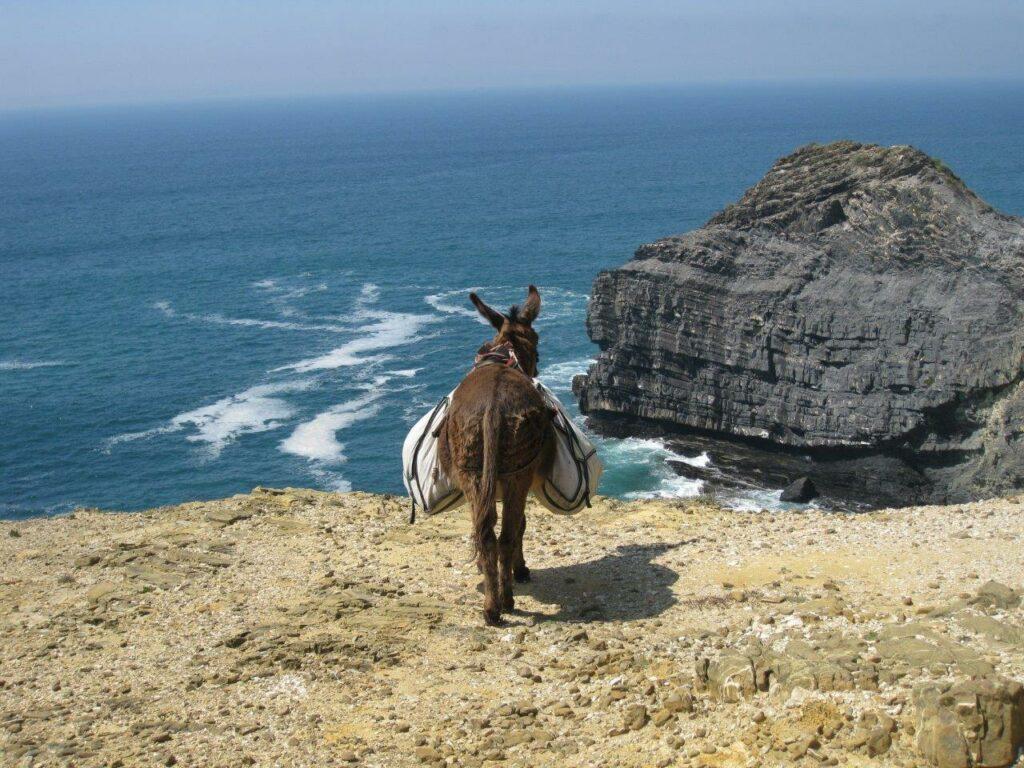 selwandern-Algarve-Portugal-Esel-an-Kueste
