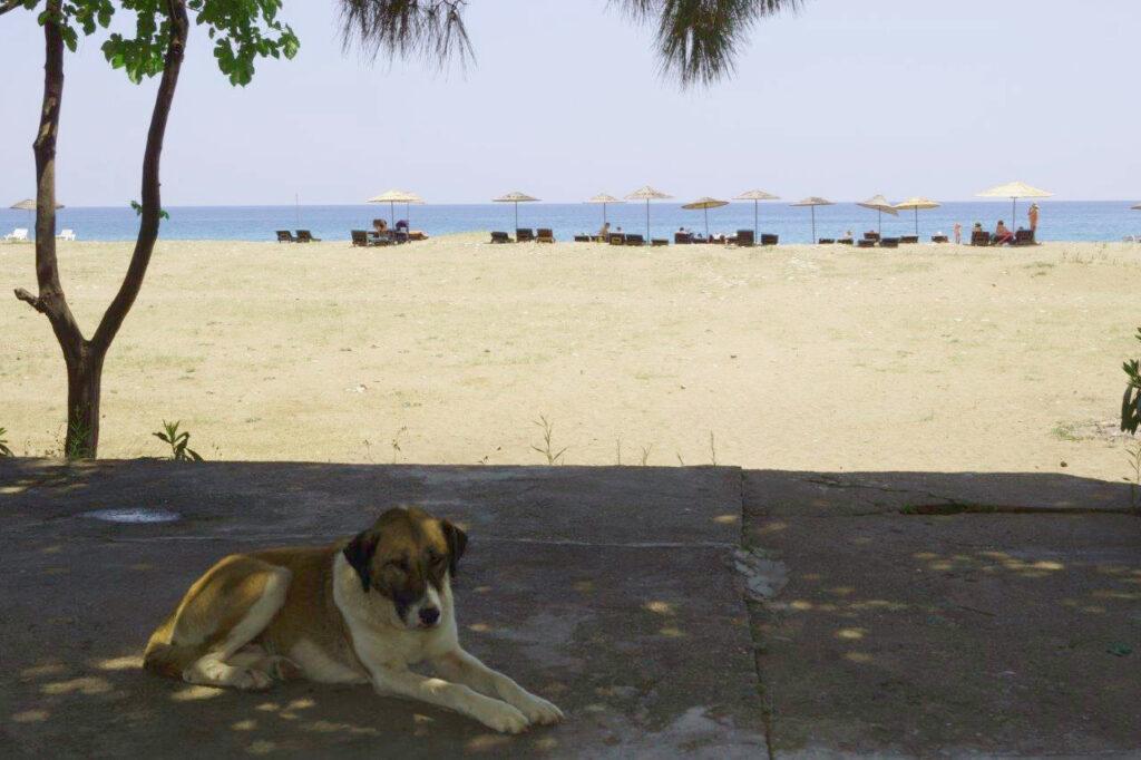 Hund am Strand von Cirali, Türkei