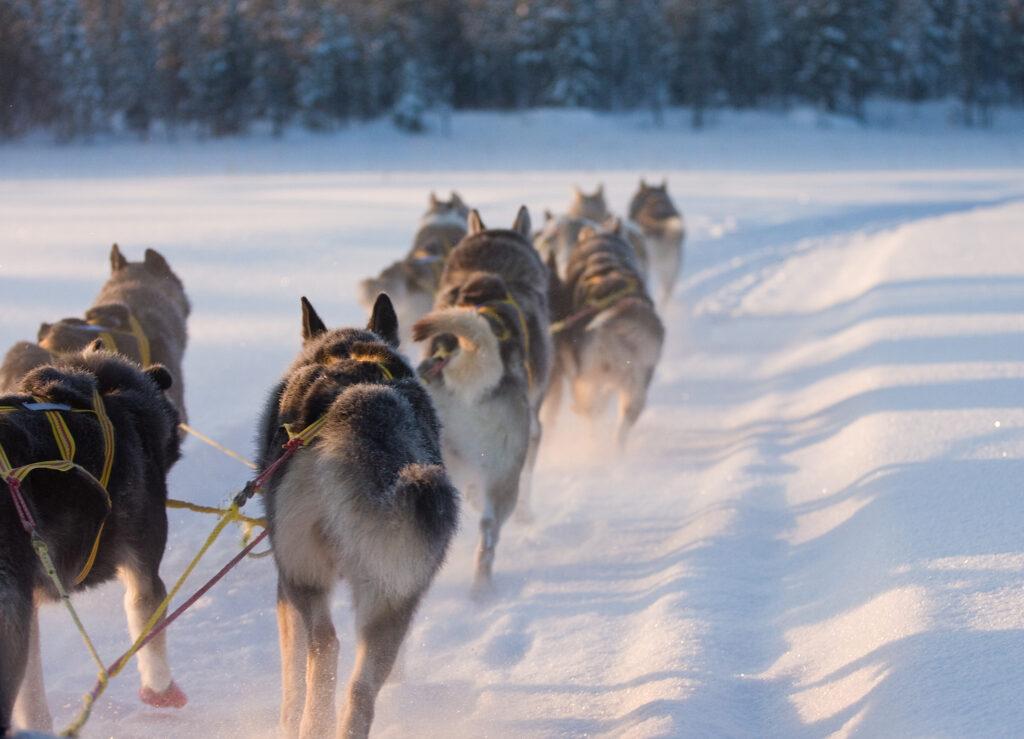 benteuer-natur-weg-Hundeschlitten-lappland-schweden