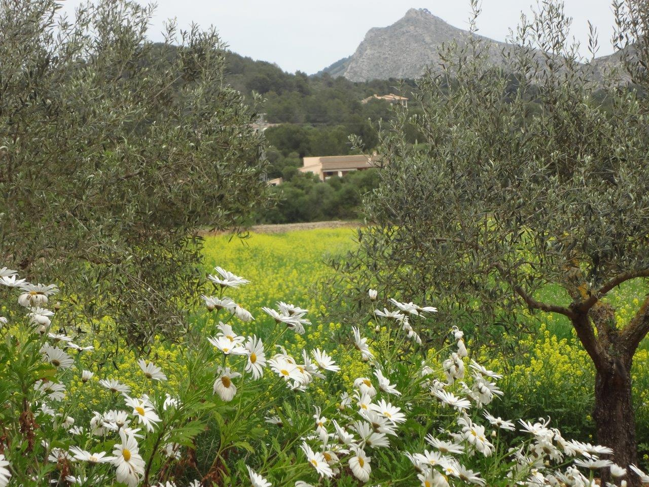 Alternativer Urlaub in der Natur Mallorca's